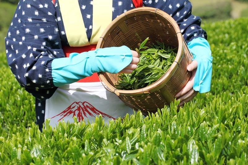 japanische-tee-ernte Die Jahreszeiten und der japanische Tee