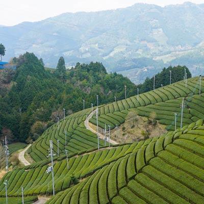 teegarten-japan Die Jahreszeiten und der japanische Tee