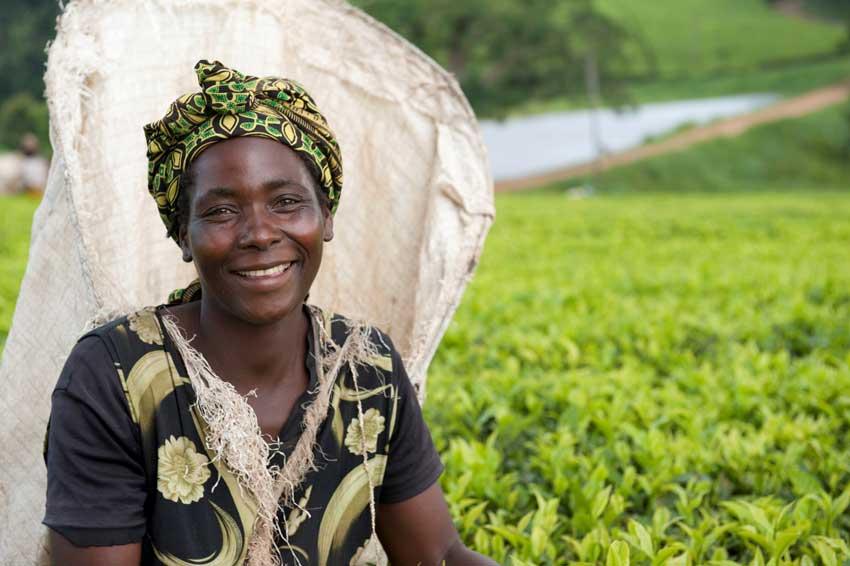 136 Kleinbauern Initiativen gestalten den Tee Handel nachhaltig und fair und erzeugen beste Teespezialitäten