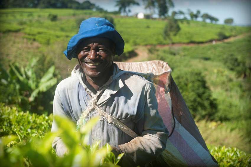 Makata5 Kleinbauern Initiativen gestalten den Tee Handel nachhaltig und fair und erzeugen beste Teespezialitäten