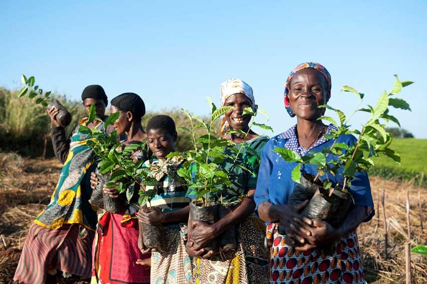 Small-Holders Kleinbauern Initiativen gestalten den Tee Handel nachhaltig und fair und erzeugen beste Teespezialitäten